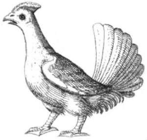 chicken wing illustration