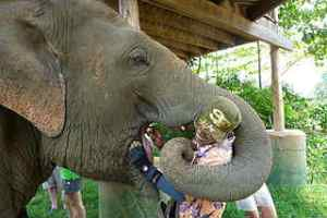 Picture of a man feeding an elephant