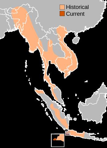 range of Javan Rhinoceros