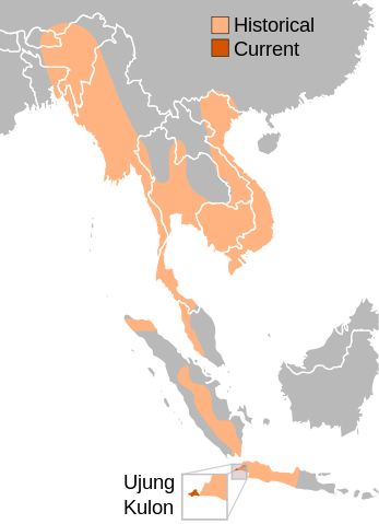 range of Javan Rhinoceros