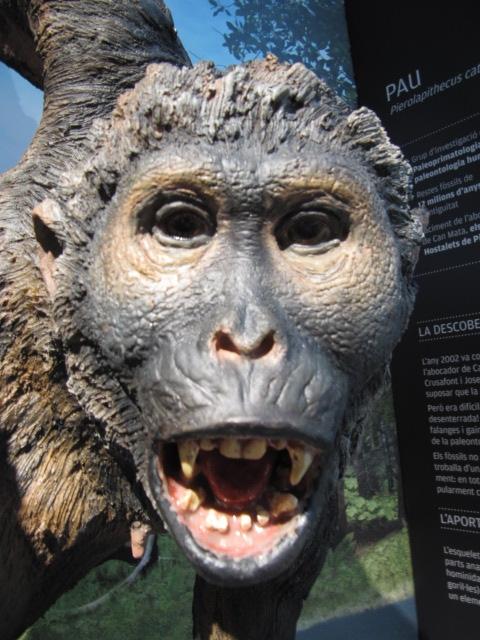 Pierolapithecus