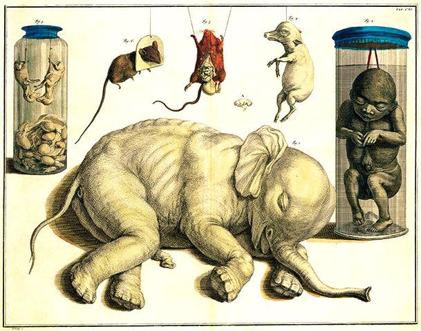 Albertus Seba's Cabinet of Curiosities