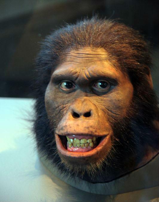 picture of Australopithecus africanus