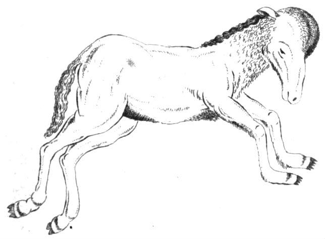 bear-horse hybrid