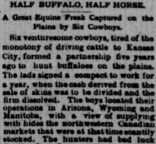buffalo-horse hybrid