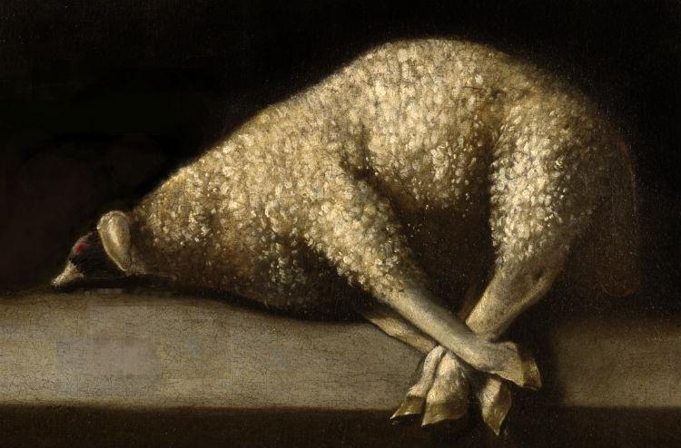 capercaillie-sheep hybrid