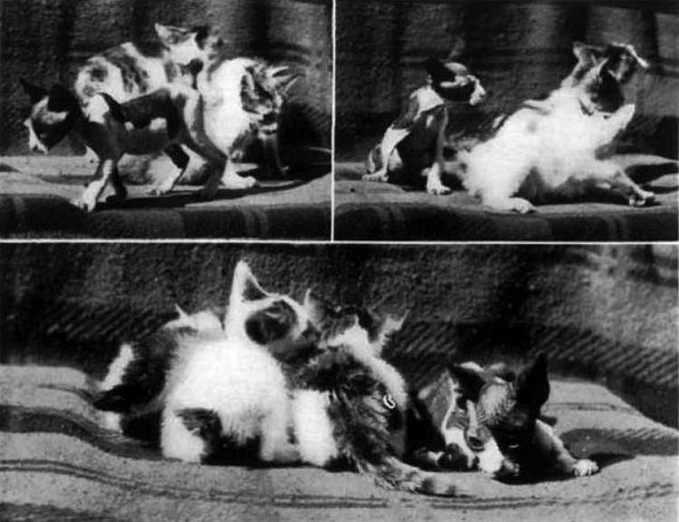 cat-dog hybrid