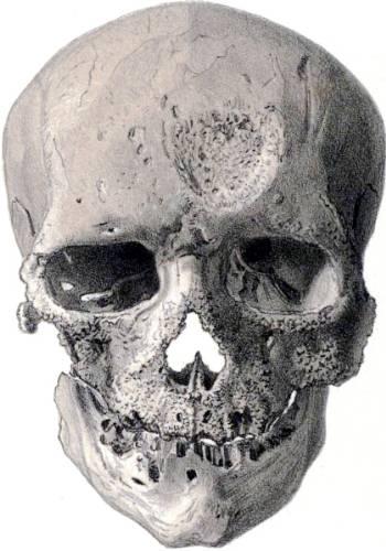 [Image: cro-magnon-skull-350-500-31.jpg]