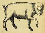 pig with a human head