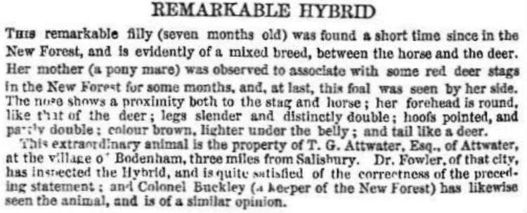 deer-horse hybrid