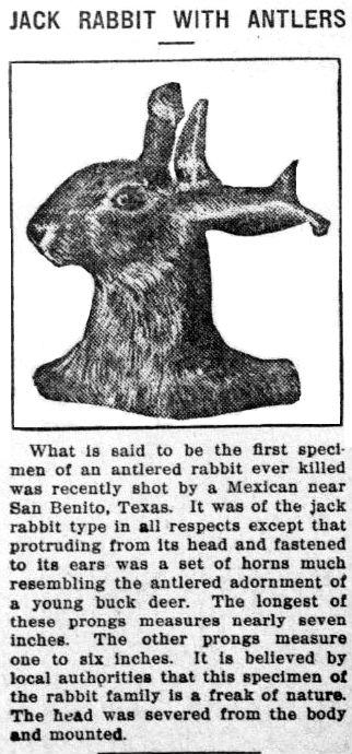 deer-hare hybrid
