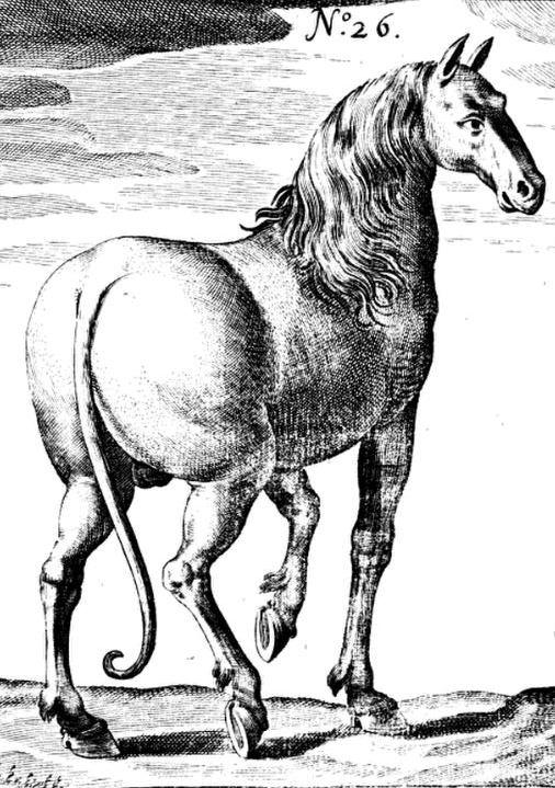 dog-horse hybrid