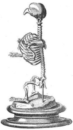 dog-turkey hybrid skeleton