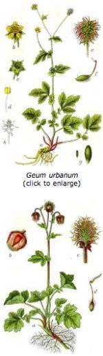 Mendel Geum