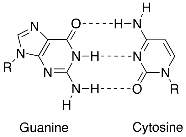 Guanine-cytosine base pair