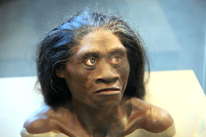 picture of Homo floresiensis