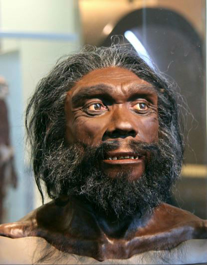 picture of Homo heidelbergensis