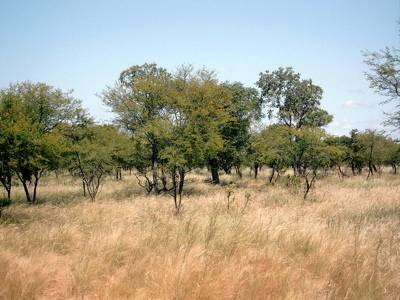 Picture Of Habitat