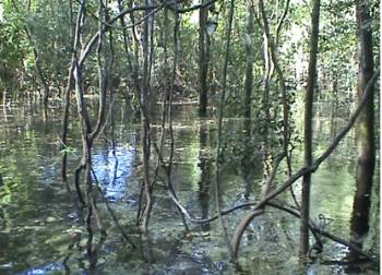 Inundated jungle