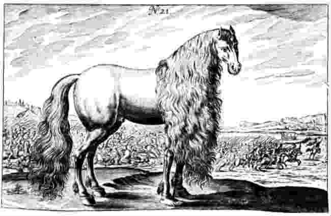 Julius Caesars horse