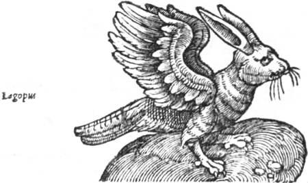 bird-rabbit hybrid
