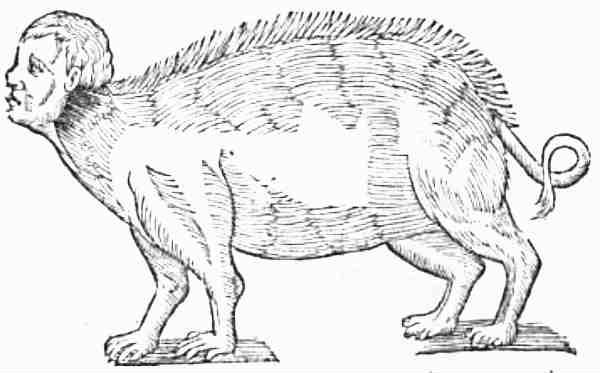 Pig-human Hybrid