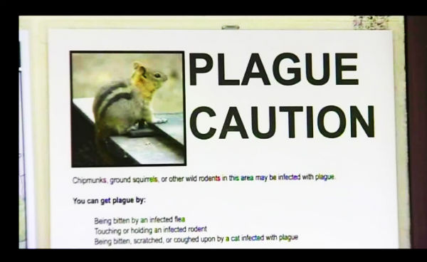 Plague Warning Yosemite National Park