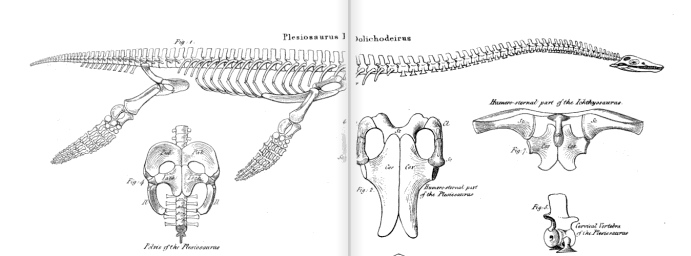 plesiosaurus dolichodeirus conybeare