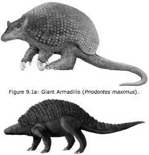 priodontes and nodosaurus