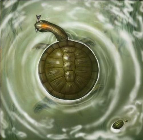 Picture of the newly discovered fossil, turtle Puentemys.