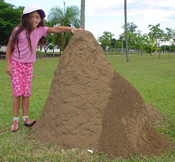South American anthill