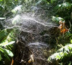 Picture of a spider web.