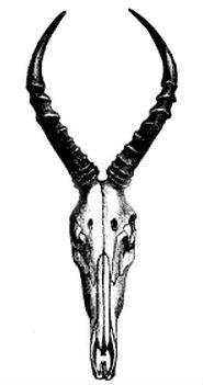 topi-hartebeest hybrid