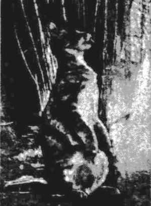 cat-wallaby hybrid