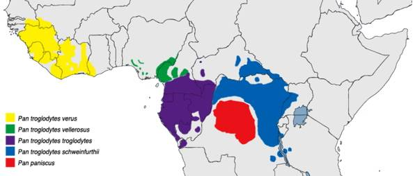 map showing chimpanzee's distribution