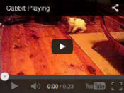cabbit video