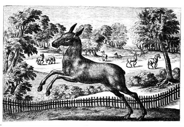 mule breeding