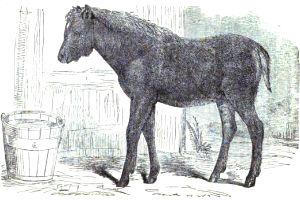 horse-deer hybrid