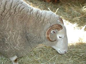 Sheep home study course