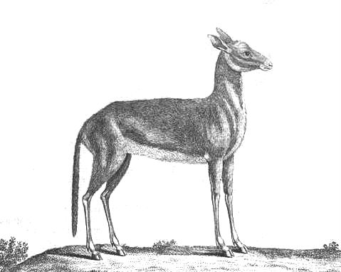 sheep-deer hybrid