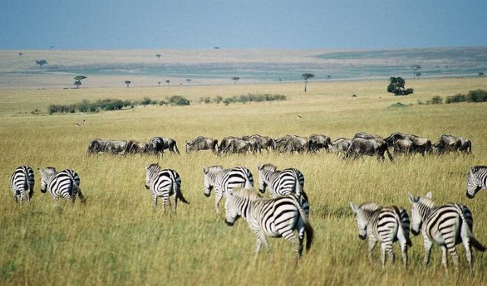Picture of zebra habitat